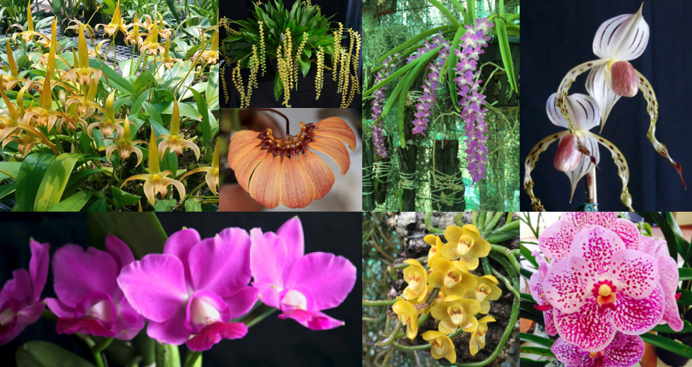 Nambour Orchid Society
